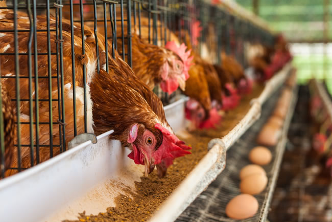 elecon Animal Feed & Poultry industry